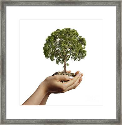 Womans Hands Holding Soil With A Tree Framed Print