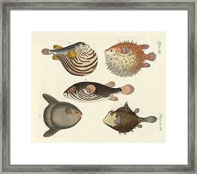 Wonderful Fish Framed Print by Splendid Art Prints