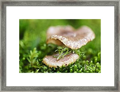 Wood Mushrooms Framed Print by Elena Elisseeva