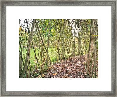 Woodland Path Framed Print
