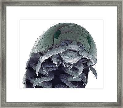 Woodlouse Framed Print