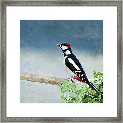 Woodpecker Framed Print by Heike Hultsch