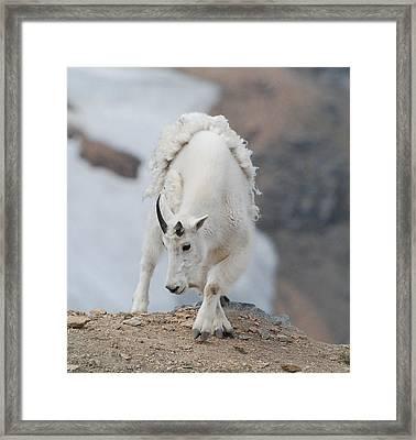 Wyoming Native Framed Print by Beth Sullivan