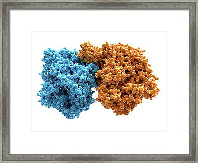 Xanthine Oxidase Framed Print by Alfred Pasieka