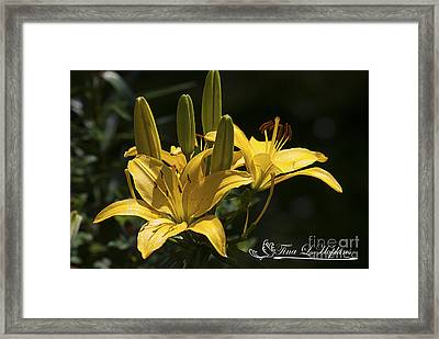 Framed Print featuring the photograph Yellow Day Lily 20120615_43a by Tina Hopkins