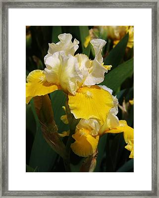 Yellow Delight Framed Print by Bruce Bley