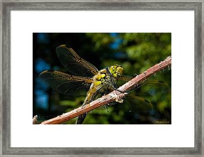 Yellow Dragon Framed Print by WB Johnston