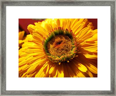 Yellow Flower Framed Print by Joyce Woodhouse