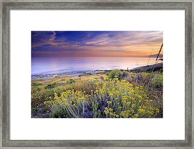 Yellow Flowers At The Sea Framed Print by Guido Montanes Castillo