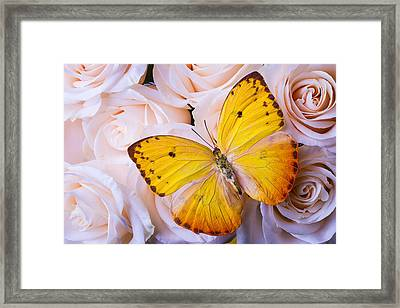 Yellow Wings Framed Print by Garry Gay