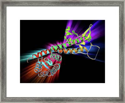 Yersinia Pestis Virulence Factor Framed Print by Laguna Design