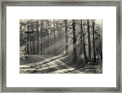 Yosemite Sunlight Framed Print