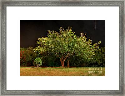 Young And Old - Summer Framed Print