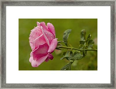 Your The One Framed Print by Nick  Boren