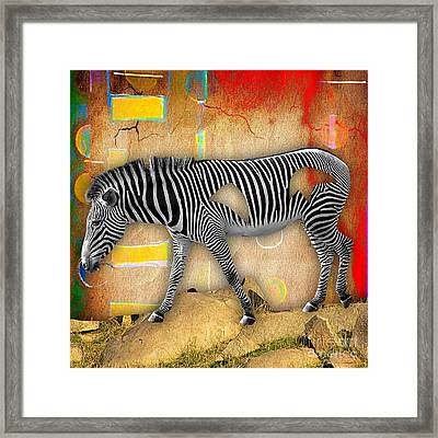 Zebra Collection Framed Print by Marvin Blaine