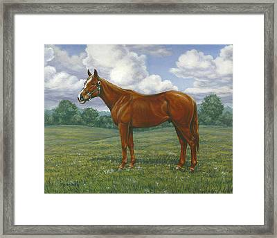 Ziggy Framed Print by Richard De Wolfe