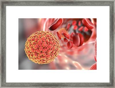 Zika Virus In Blood Framed Print