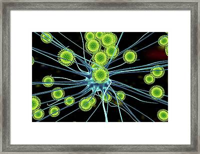 Zika Virus Infecting Neuron Framed Print by Kateryna Kon