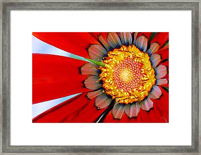 Zinnia In Red Framed Print by Wendy Wilton