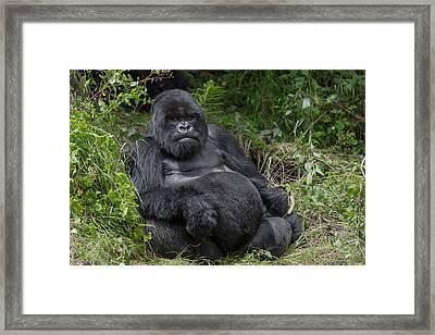 Africa, Rwanda, Volcanoes National Park Framed Print