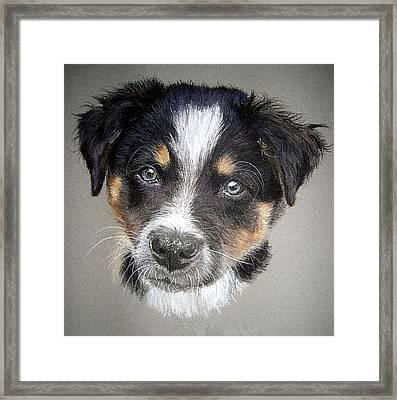 Border Collie Dog Portrait Framed Print by Olde Time  Mercantile