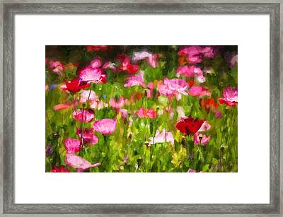 California Poppies Painted Framed Print