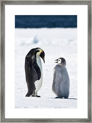 Cape Washington, Antarctica Framed Print