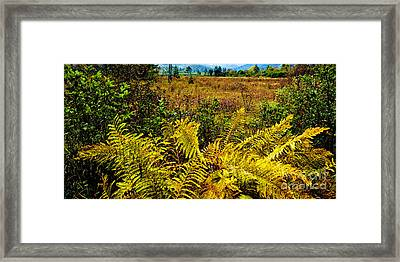 Cranberry Glades Botanical Area Framed Print by Thomas R Fletcher