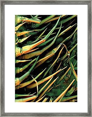 Cucumber Leaf Trichomes Framed Print