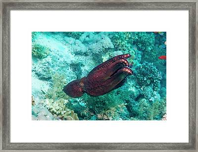 Day Octopus Framed Print by Georgette Douwma