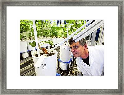 Effect Of Climate Change On Wine Framed Print by Philippe Psaila
