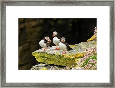 Europe, Scotland, Shetland Islands Framed Print