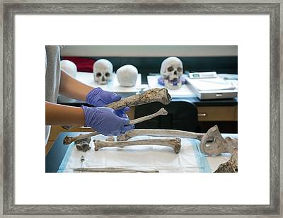 Forensic Scientist Identifying Remains Framed Print