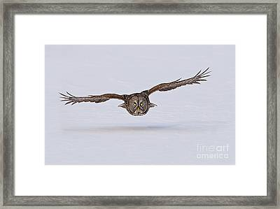 Great Gray Owl Framed Print by Michael Cummings