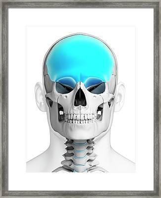 Human Skull Framed Print