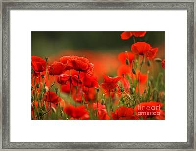 Poppy Dream Framed Print