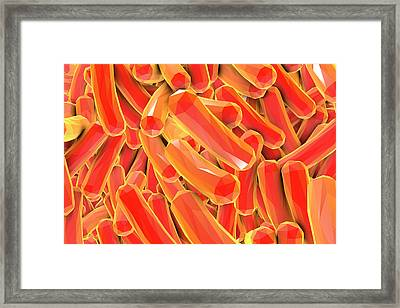 Rod-shaped Bacteria Framed Print by Kateryna Kon