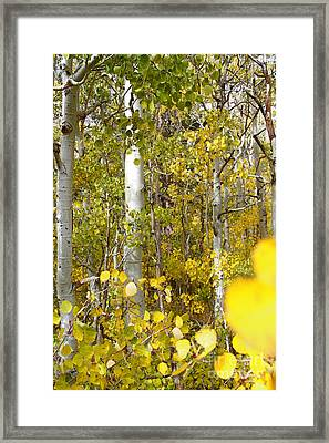 Sierra Autumn Framed Print by ELITE IMAGE photography By Chad McDermott