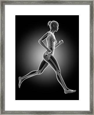 Skeletal System Of A Runner Framed Print