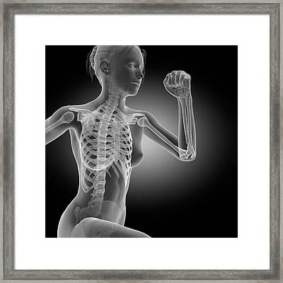 Skeletal System Of Jogger Framed Print