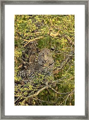South Africa, Sabi Sabi Private Game Framed Print by Jaynes Gallery