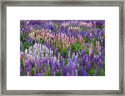 South Pacific, New Zealand, South Island Framed Print