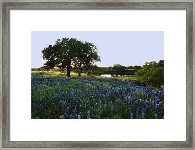 Framed Print featuring the photograph 10 by Susan Rovira