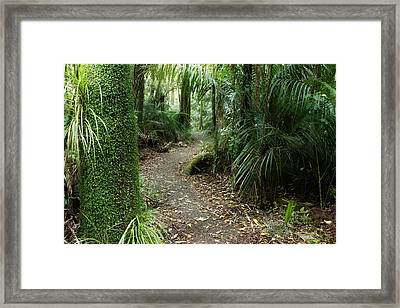 Tropical Forest Framed Print by Les Cunliffe