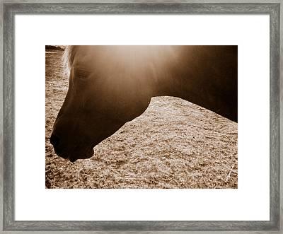 Untitled Framed Print by Shaila Yovan Tenorio