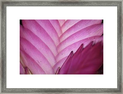 Untitled Framed Print by Ton Koene