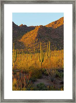 Usa, Arizona, Tucson Framed Print