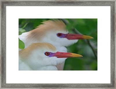 Usa, Florida, St Framed Print