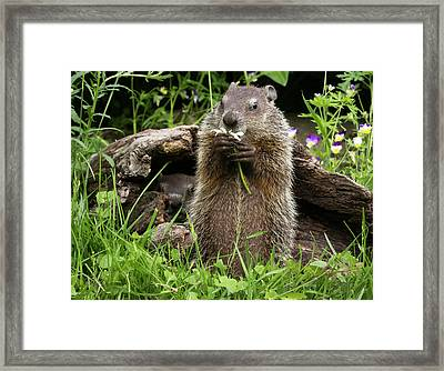 Usa, Minnesota, Sandstone, Minnesota Framed Print by Jaynes Gallery