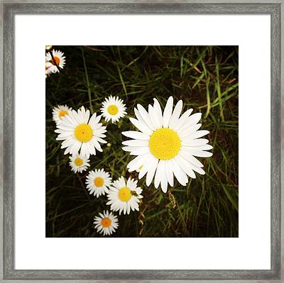 Wild Daisies Framed Print by Les Cunliffe